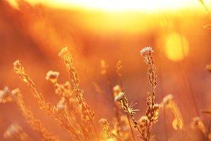 meadow flowers autumn in field