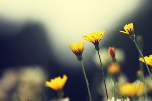 flowers vintage background