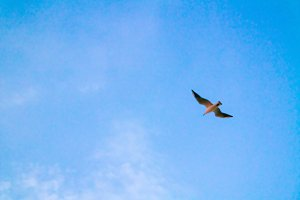Beautiful seagull on blue sky background