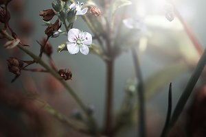 mystery flowers