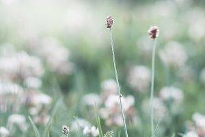 vintage field plants