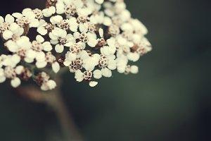 gentle light soft wildflowers