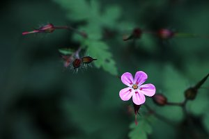 pink little flowers on dark
