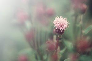 gentle light field flowers