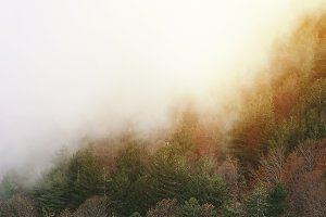 forest horizon line in fog