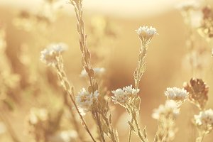 vintage flowers sunset