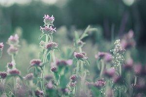 meadow little soft pink flowers