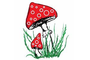 Mushroom amanita sketch vector