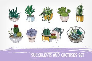 Cactuses and succulents composition