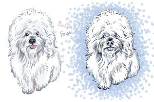 vector white cute dog Bichon Frise breed