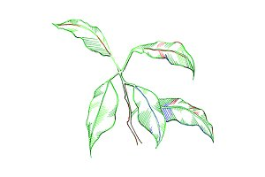 Green leaves sketch vector art