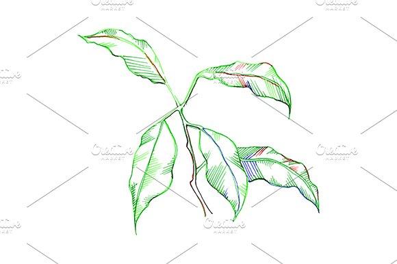 Green Leaves Sketch Vector Art
