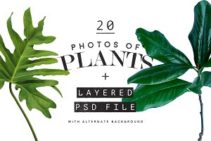 20 Photos of Plants + Layered PSD