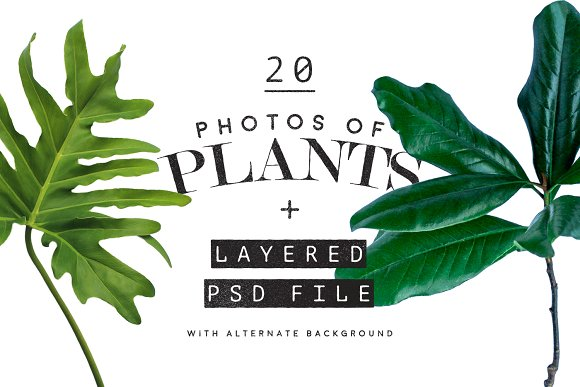 20 Photos Of Plants Layered PSD