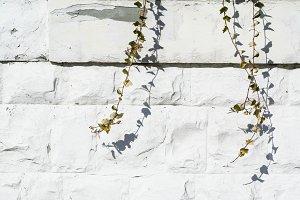 White Brick & Ivy Wall