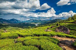 Tea plantations and river in hills,  Kerala, India