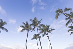 Palm Trees against ombre sky