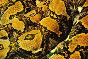 Snake Texture Full Frame