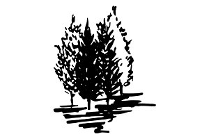 Monochrome trees sketch art vector