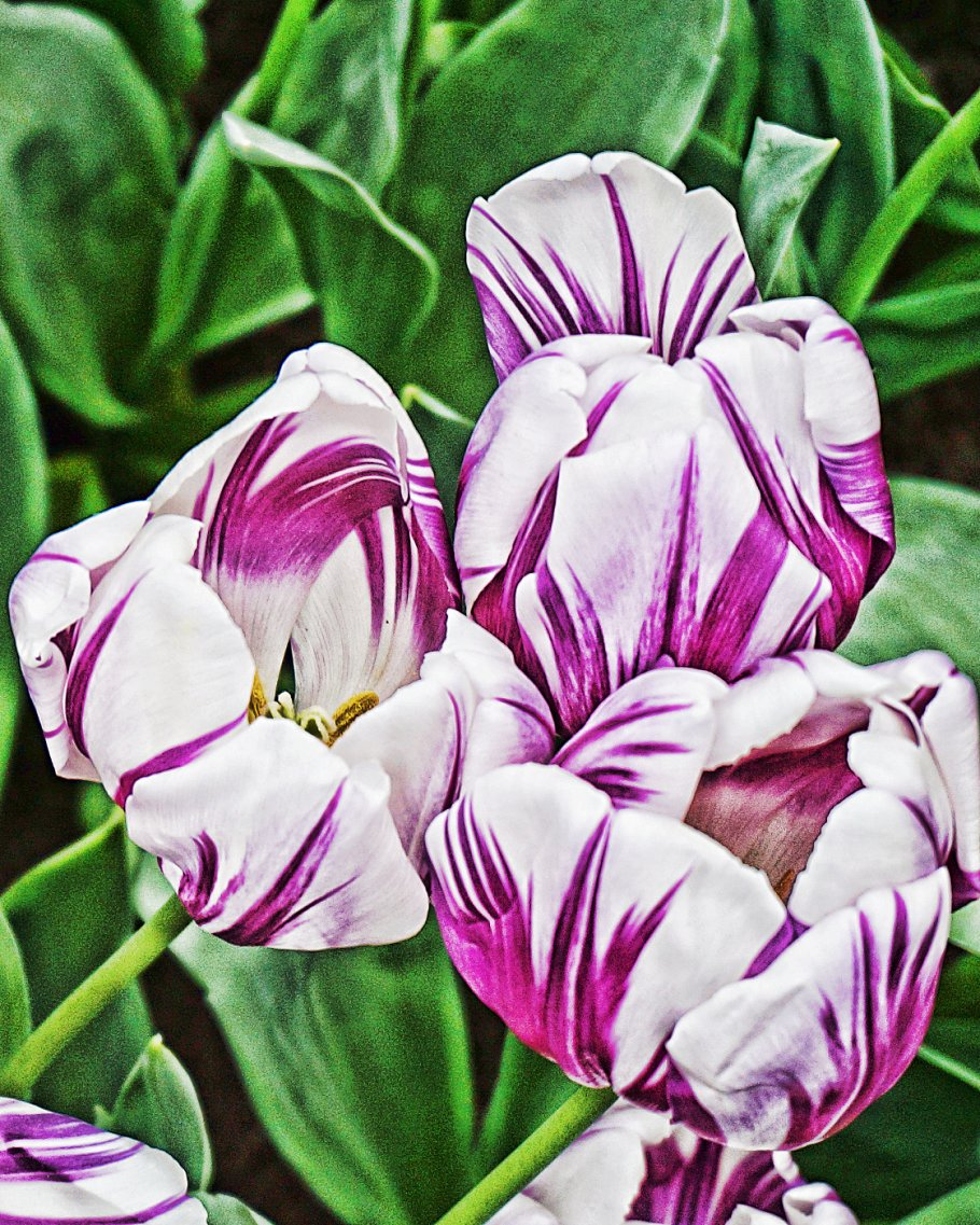 Purple And White Abstract Flowers Abstract Photos Creative Market