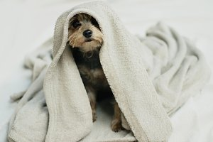 Snug puppy in a blanket