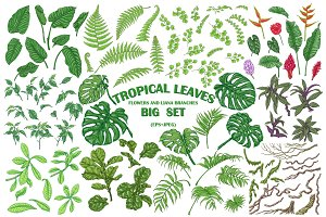 Green Tropic Leaves Set