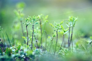 Green little trees in forest. Nature outdoor background