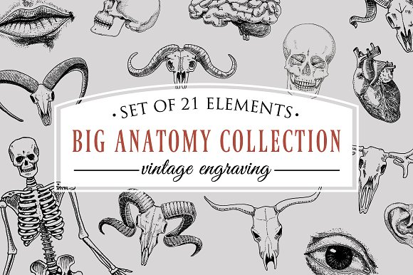 Human Biology Anatomy Illustration Engraved Hand Drawn In Old Sketch And Vintage Style Skull Or Skeleton Silhouette Bones Of The Body Lips And Ear With Nose Brain And Heart