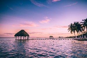 Magenta Tropical Palms at Sunset