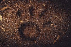Wildlife Leopard's Paw Print
