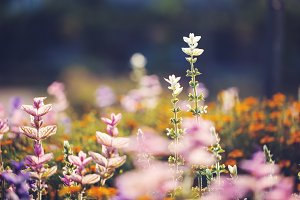 colorful flowers in beautiful autumn flowerbed