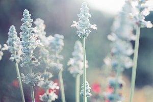 white vintage flowers in flowerbed in autumn park