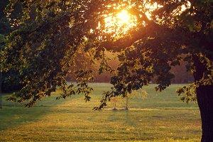 natural autumn park in evening outdoor sunshine