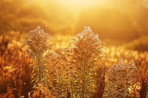 autumn golden field background. Outdoor sunny natural photo