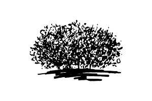 Monochrome bush sketch art vector