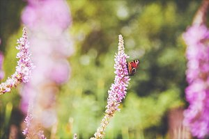 iseeyouflower summer butterfly 1