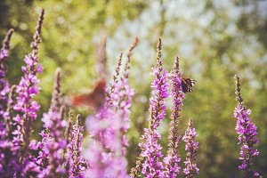 iseeyouflower summer butterfly 2