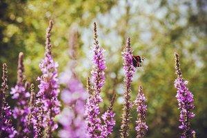 iseeyouflower summer butterfly 3