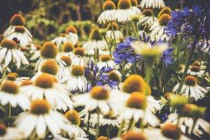 iseeyouflower kew border 1