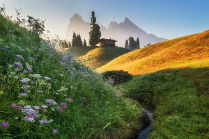 Mountains and flowers at sunrise
