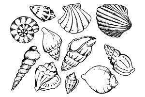 Sea shell sketch line art set vector