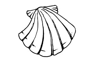 Sea shell ink line sketch art vector