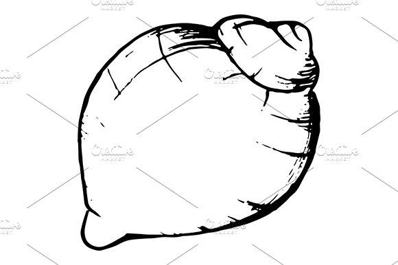 Sea Shell Ink Line Sketch Art Vector Illustrations Creative Market