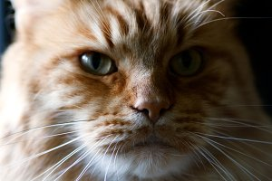 Portrait of a cat close-up.