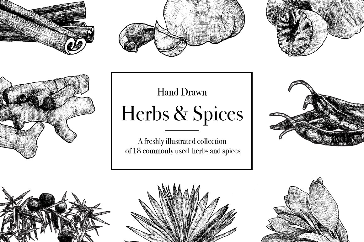 Hand Drawn Herbs & Spices ~ Illustrations ~ Creative Market
