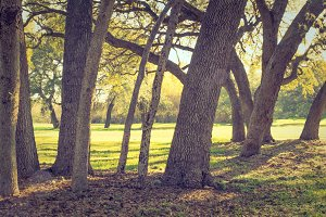 Tree Trunks Looking Vintage