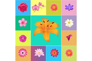 Fresh Flower Heads Colorful Vector Collection