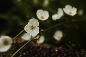 Wild White Flower