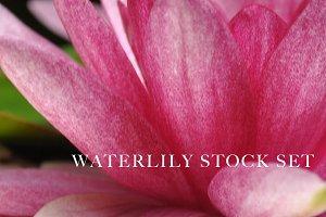 Waterlily Stock Set (6 Photos)