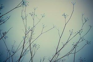 soft wintery